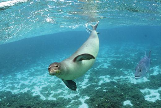 The U.S. Navy & Marine Mammals: Avoiding Scientific Gaffes in Journalism