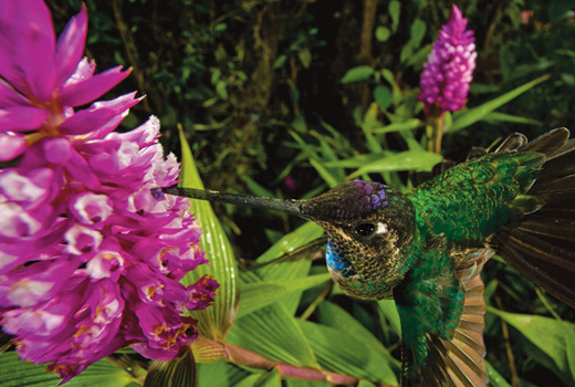 Christian Ziegler:  The World of Wild Orchids