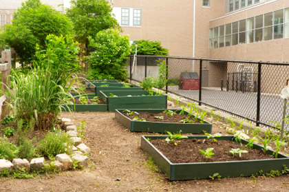 © iStockphoto.com/youngvet | A vegetable garden at an inner city elementary school. The garden helps to teach the students the basics of organic farming.