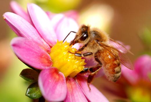 Honey Bee Health & Food Security