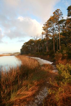 U.S. Air Force Photo|The salt marsh created along the shoreline of Hurlburt Field.
