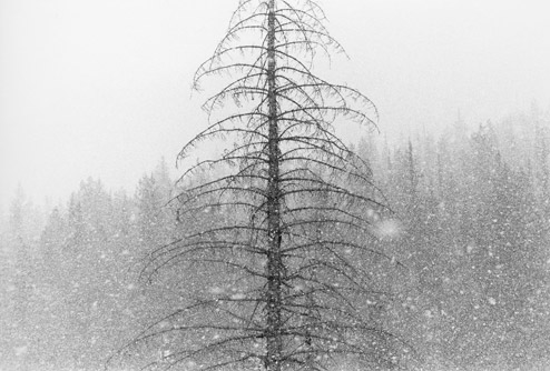|Snowfall, 1979