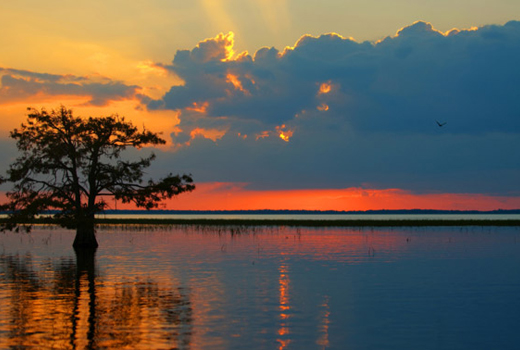 The Florida Everglades:  Rescuing an Endangered Ecosystem