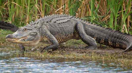 Photo Credit: Sout Florida Water Management District