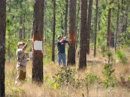 Photo by Les Pearson  Camp Lejeune wildlife technicians marking a 200-foot red-cockaded woodpecker cluster buffer.
