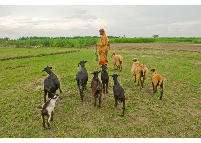 12av2010_06_Bangladesh-26