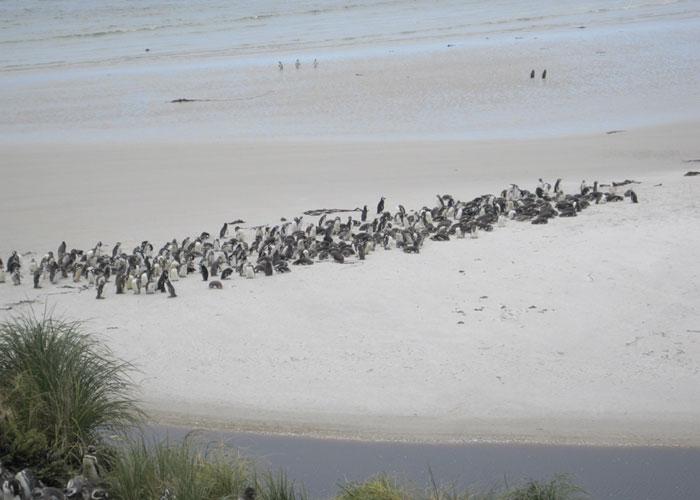 Penguins-Antarctica-Article-2013