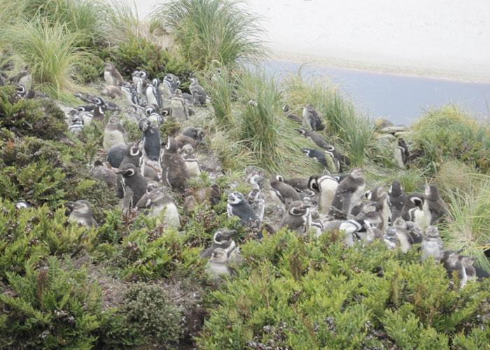 Penguins2-Antarctica-Article-2013